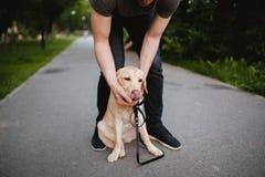 Не учитывают собаке съела отброс для прогулки, команды собаку стоковое изображение