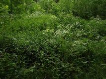 Не хорошо выхоленный угол парка Стоковое Изображение RF