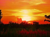 Нива солнца вечера Стоковые Изображения