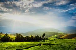 Нива с горой на восходе солнца Стоковое Фото