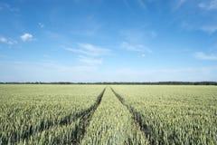 Нива с пшеницей в Баварии Стоковое Изображение RF