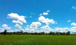 Нива фермы Стоковые Изображения