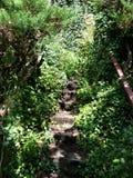 нигде лестницы к Стоковое Изображение