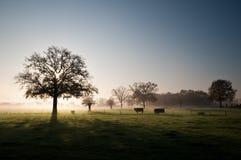 нидерландское vierlingsbeek стоковая фотография rf
