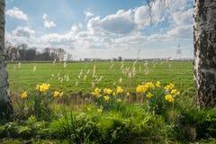 Нидерланды весной Стоковое Изображение