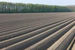 Нидерланды поля спаржи Стоковое Изображение