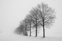 Нидерланд, ландшафты и мельницы в wintertime стоковое изображение rf