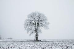 Нидерланд, ландшафты и мельницы в wintertime стоковое фото
