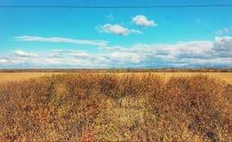 Небо и поле стоковая фотография rf