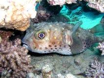 нижние рыбы Стоковые Фото