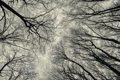 Нижний взгляд деревьев в последнем лесе осени Стоковые Изображения RF