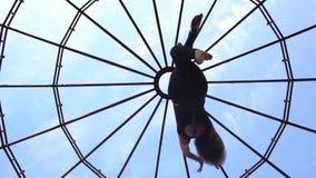 Нижний взгляд как брюнет поворачивает в кольцо для воздушной акробатики сток-видео