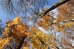 Нижний взгляд листьев бука Стоковая Фотография RF