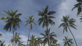 Нижний взгляд на пальмах на фоне голубого неба с белыми облаками во дне лета солнечном в тропическом курорте сток-видео