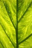 нижняя сторона листьев Стоковые Изображения