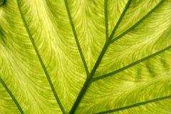 нижняя сторона листьев Стоковая Фотография RF