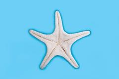 нижняя сторона starfish Стоковые Фото