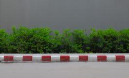 Низкая загородка кустарника с предпосылкой стены Стоковые Фотографии RF