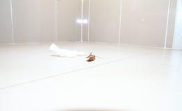 Низкая и широкоформатная съемка мертвого таракана на туалете пола Стоковые Фотографии RF