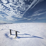 Низкие грабли солнца зимы через свежий снег Стоковое Изображение RF