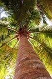 низкий взгляд пальмы Стоковое Изображение RF