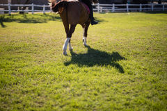 Низкий раздел женской верховой лошади жокея Стоковое Изображение RF