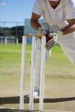 Низкий раздел шарика wicketkeeper заразительного за пнями стоковое фото