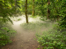 Низкий туман в лесе Стоковая Фотография RF