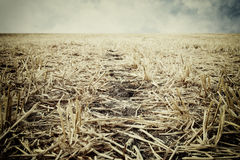 Низкий угол сухой травы глобальное потепление принципиальной схемы Стоковое Изображение