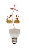 низкопробный дневной растущий вал светильника Стоковое Изображение