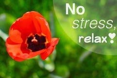 Никакой стресс, не ослабляет мотивационный плакат цитаты Стоковые Изображения RF