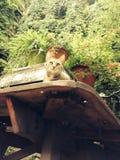 Никакой укомплектовывает личным составом кота Стоковая Фотография RF