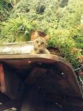 Никакой укомплектовывает личным составом кота Стоковое Изображение