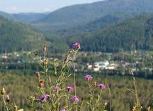 дни altai продолжают лето гор Стоковая Фотография RF