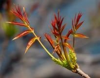 Новая ветвь дерева Стоковая Фотография