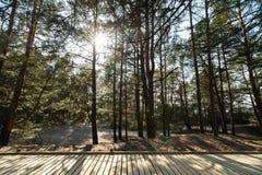 Новая деревянная дорога водя от пляжа залива Балтийского моря с белым песком к лесу дюны с соснами стоковое фото