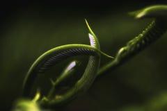 Новая жизнь вытекая Стоковая Фотография RF