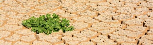 Новая жизнь в пустыне Стоковая Фотография
