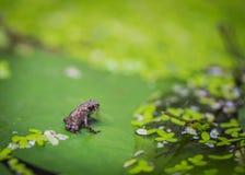 Новая жизнь жабы Стоковые Фотографии RF
