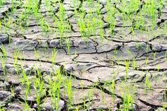 Новая жизнь на сухой почве Стоковые Изображения RF