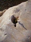 Новая жизнь от камня стоковое фото rf
