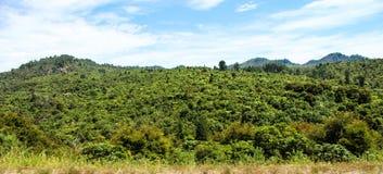 Новая Зеландия в лете Стоковые Изображения RF