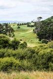 Новая Зеландия в лете Стоковая Фотография