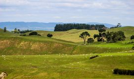 Новая Зеландия в лете Стоковое Изображение