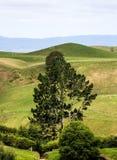 Новая Зеландия в лете Стоковое Фото