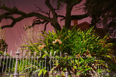 новая ноча orleans Стоковые Изображения