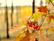 Новая осень яркое падение Стоковая Фотография RF