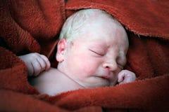 новая принесенная младенцем Стоковая Фотография