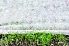 Новая лужайка с зеленой травой под тканью nonwoven Стоковое Фото