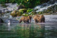 Новички женщины и медведя бурого медведя Камчатки улавливают рыб на озере Kuril Камчатский полуостров, Россия Стоковое Изображение